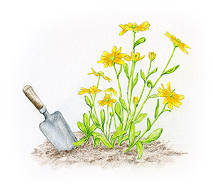 An illustration of a trowel next to some yellow flowers