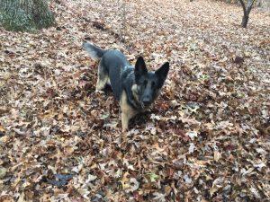 Gidget in Sea of Leaves
