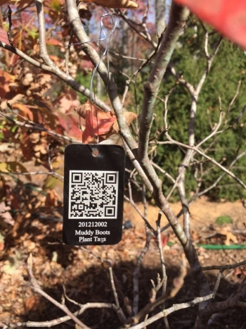Fothergilla with Interactive QR Coded Smart Phone Scannable Plant Tag